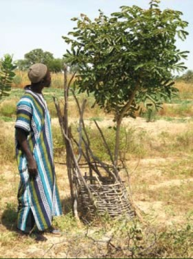 World Agroforestry Center(ICRAF)